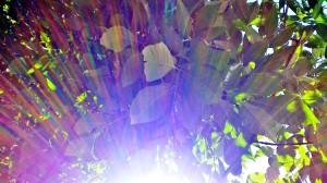 © Tournesol dans un jardin