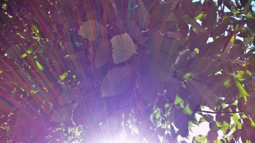 © Clr '14  Sous les arbres