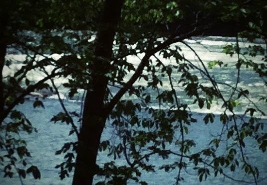 shadow tree (haiga)