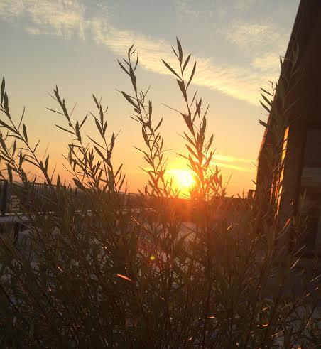 rooftop setting sun