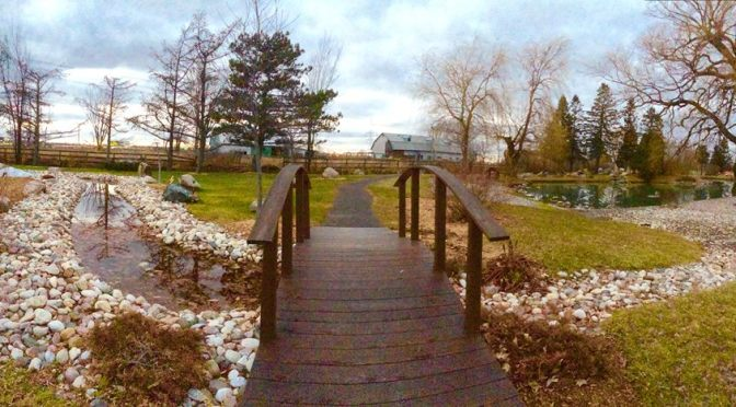bridging seasons (haibun – troiku)