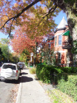 autumn-city-street