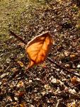 lone-leaf-abandonned